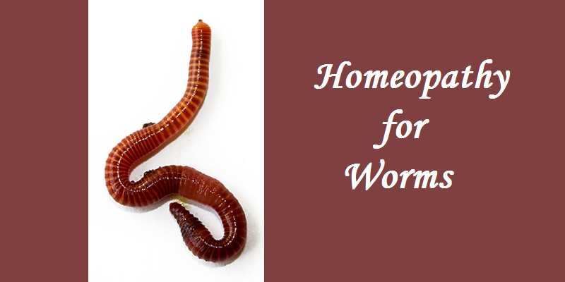 Homeopathic Medicine for worms - Tapeworm, roundworm, pinworms 1