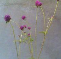 Nov  Plant