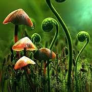 Miasmatic Diseases in Plants 1