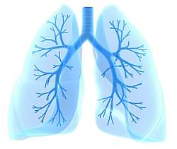 Cure and Treatment of Asthma. Homeopathic remedies and homeopathy for asthma cure.