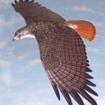 Raptors - Powerful Creatures of Nature 1