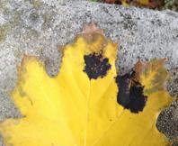 plantdoc-dec13-image003