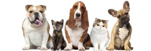 veterinary-homeopathy