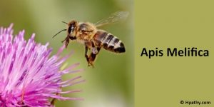 Apis melifica Homeopathic medicine for insanity