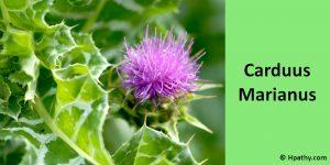 Carduus marianus homeopathic medicine for liver cirrhosis