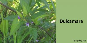 dulcamara homeopathic medicine for agalactia