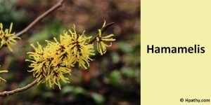 homeopathichamamelis medicine for haemorrhage
