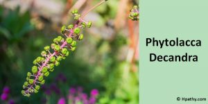 Phytolacca-Decandra homeopathic medicine for pleurodynia