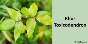 Rhus Toxicodendron homeopathic medicine for paralysis