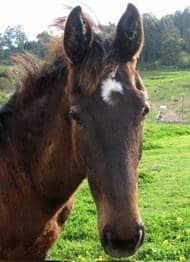cohen sept horse
