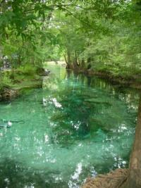 miranda ginnie springs