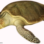 I Need to Hide in a Shell to Feel Safe – Analysis through Sensation Approach in a case of Rheumatoid Arthritis