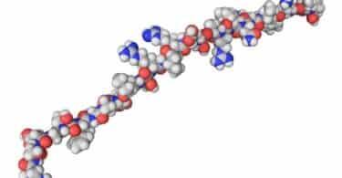 secretin hormone molecule