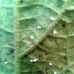 Ask The Plant Doctors - Nov 2015