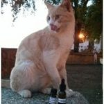 Spreading Veterinary Homeopathy - Animal Volunteering Project with Save A Gato