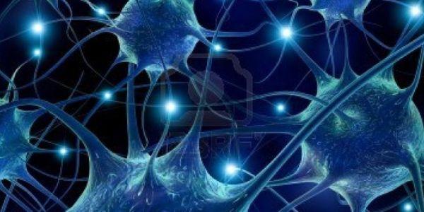 human brain cells c