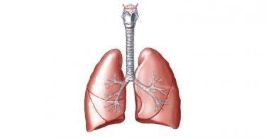 lungs ivfnn