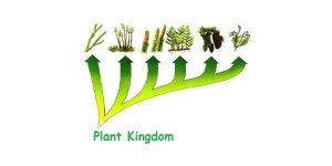 revision notesbiologyplant kingdom