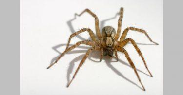 bigstockphoto Spider