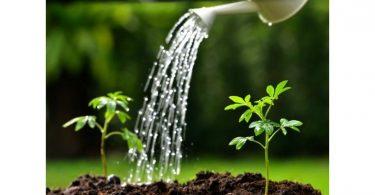 watering gardens amenic iStock