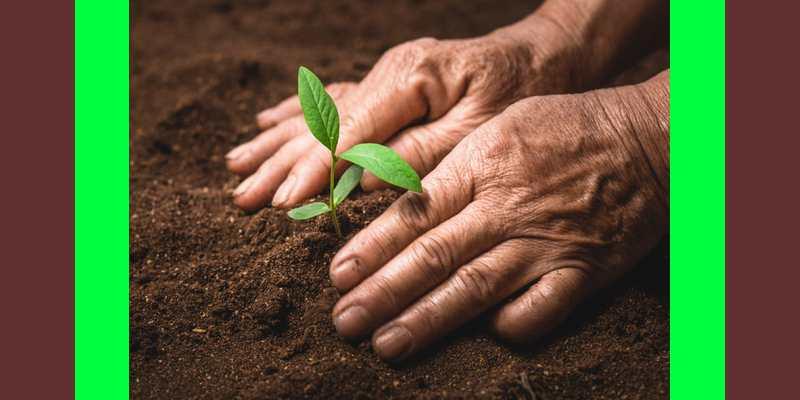 The Plant Doctor – Radko Tichavsky