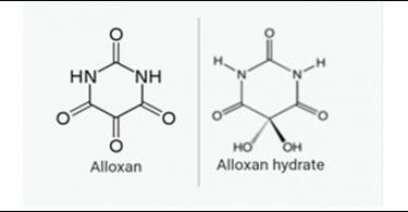 Alloxan - Its Toxicologic Pathology and Homoeopathic Utility 2