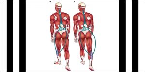 Application of Kent's Repertory  to Locomotor Disorders 1